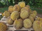 220px-Durian